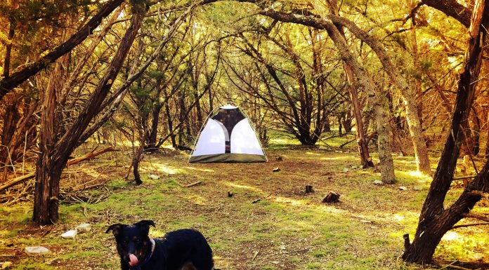 A dog and tent in the woods on a camping trip