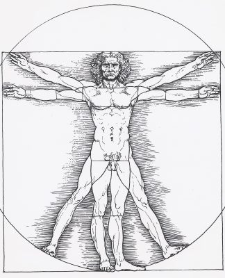 A diagram of the Vitruvian Man