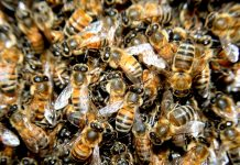 RoboBees, Science, Technology, Microrobots