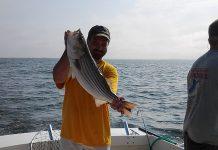 Striped bass on the Chesapeake