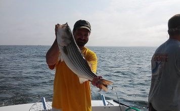 Striped bass on the Chesapeake