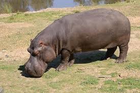 misadventures, dependas, hippo, debauchery