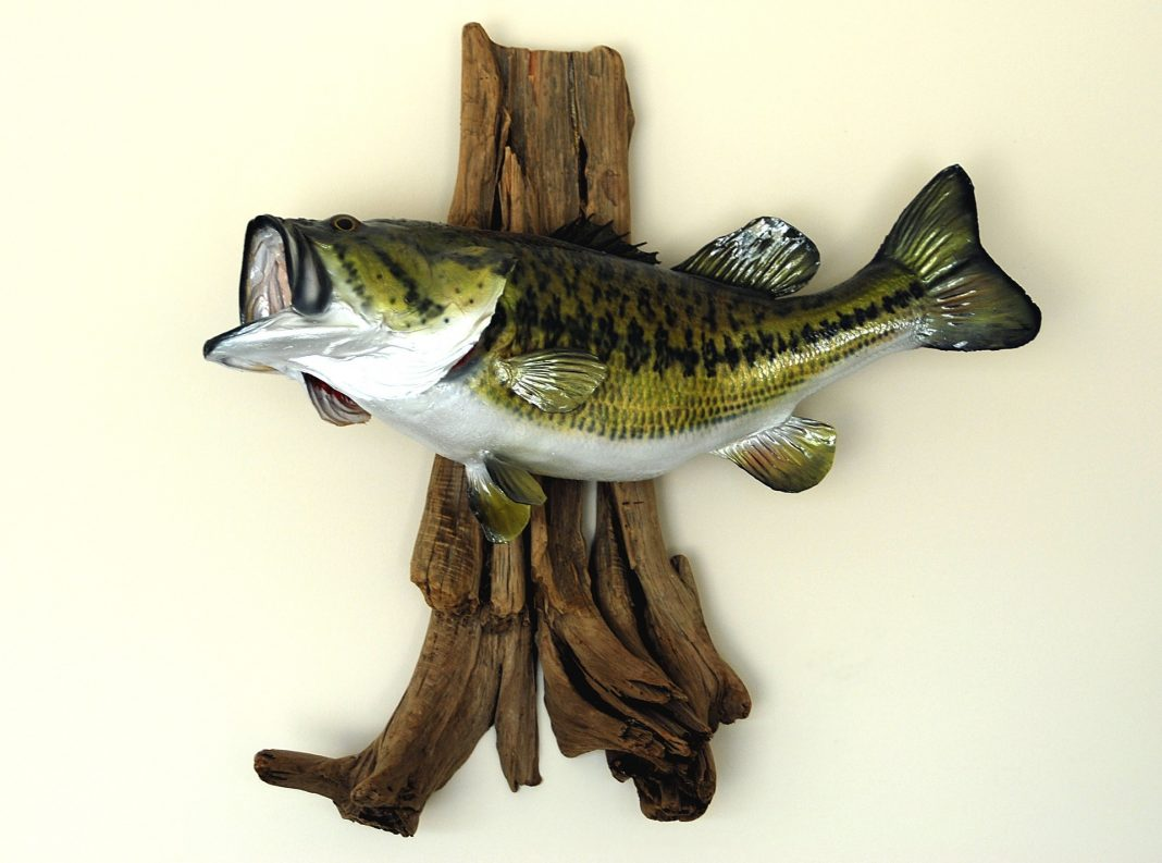 Using Soft Plastics for More Summer Fish
