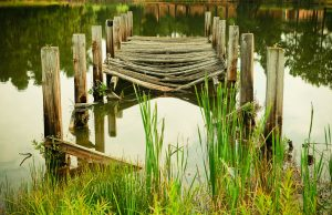 Worn out dock laying in water, perfect for fish