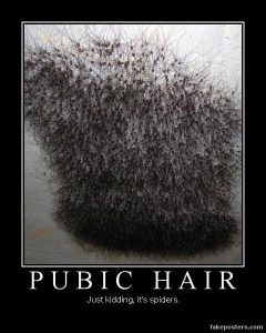 Spiders that look like pubic hair before man-scaping