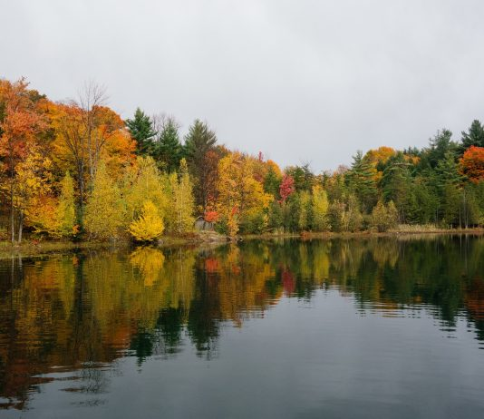 Lake with trees turning colors